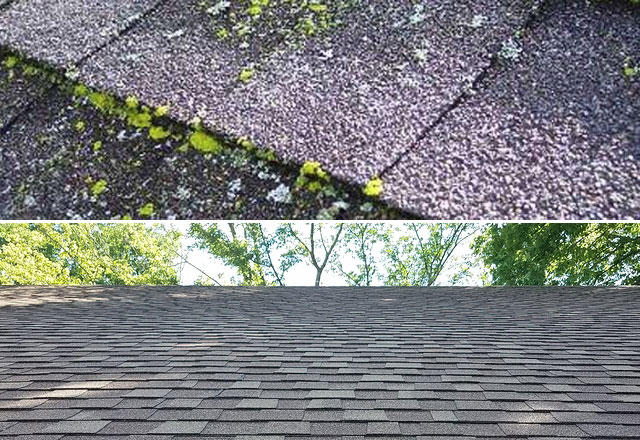 professional roof cleaning company